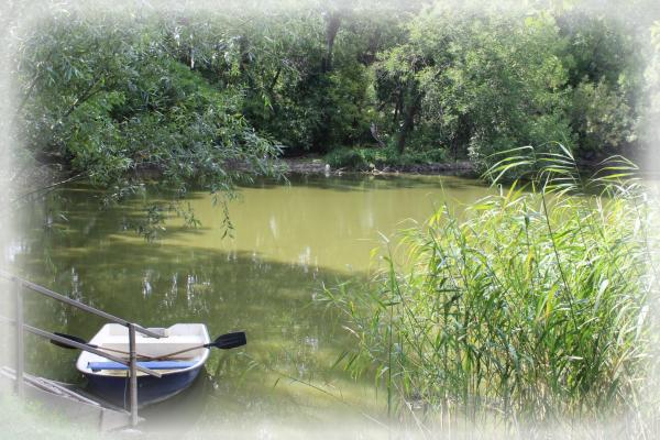 Ilustračný obrázok k zdroju Kvíz o mokradiach Dolného Žitného ostrova